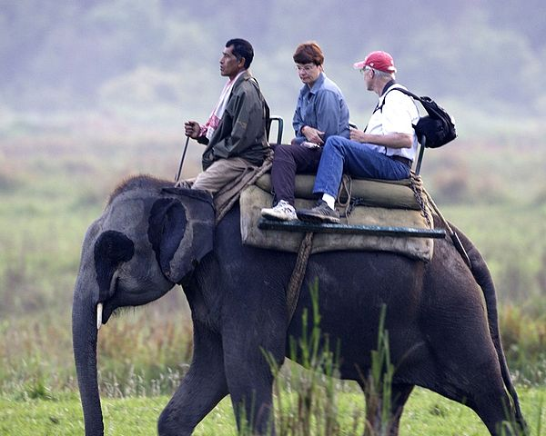 Elephant Safari(Kaziranga)
